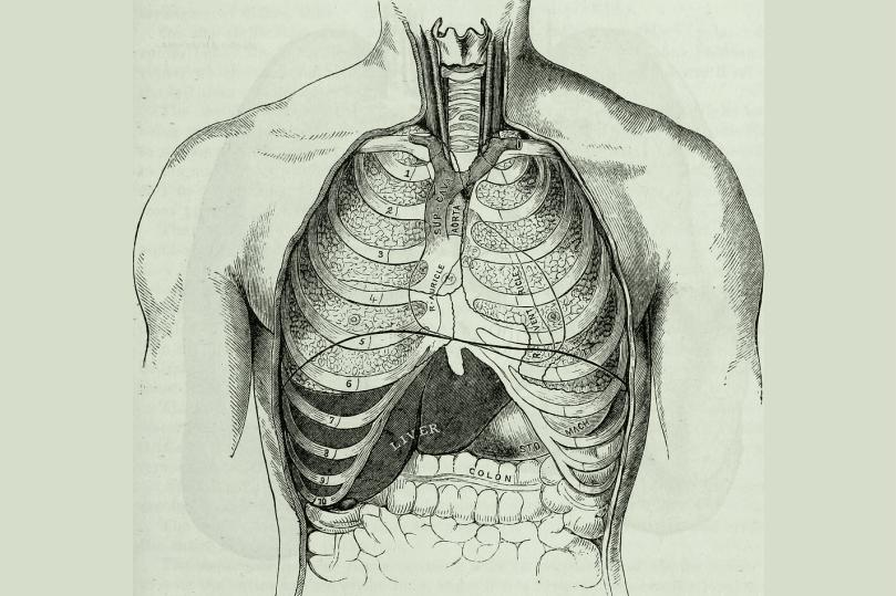 Read more about the article THE LUNGS
