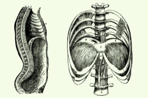 THE DIAPHRAGM