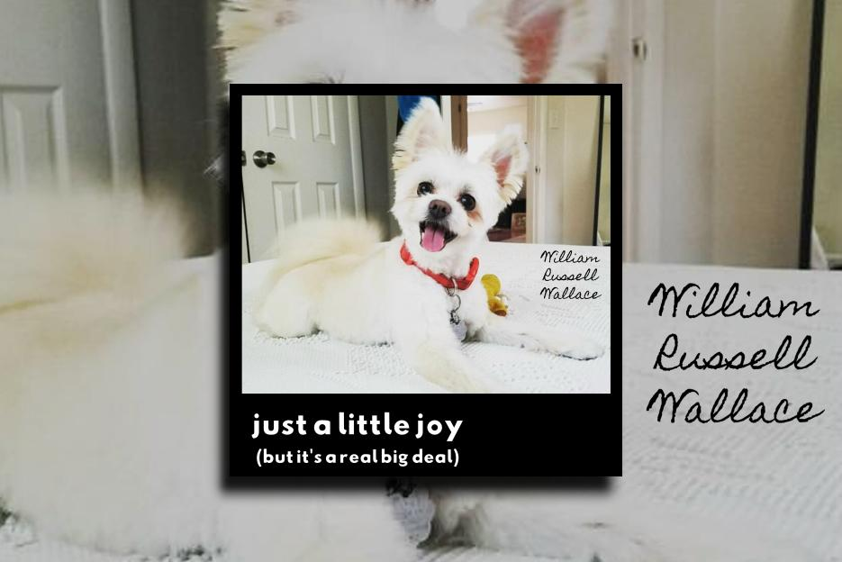 """WILLIAM RUSSELL WALLACE – """"Just a Little Joy (But It's a Real Big Deal)"""" Exclusive Review!"""